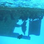 Fische versammeln sich unter unserem Boot - Banana Reef - Grand Giftun - Hurghada