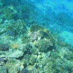Tauchen und Schnorcheln an den Riffen der Giftun Inseln - Hurghada