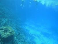 Tauchen und Schnorcheln bei einem Tauchausflug am Banana Reef - Giftun - Hurghada