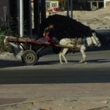 Altstadtleben Hurghada
